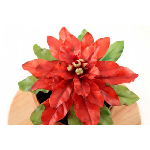 Торт в форме цветка Пуансеттия